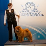 Haven Links chow-chow kennel